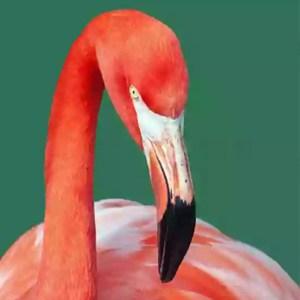 Aves Filtradoras