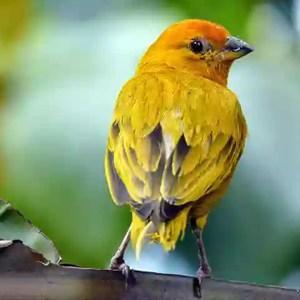 Aves Generalistas