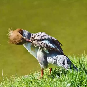 Aves omnívoras