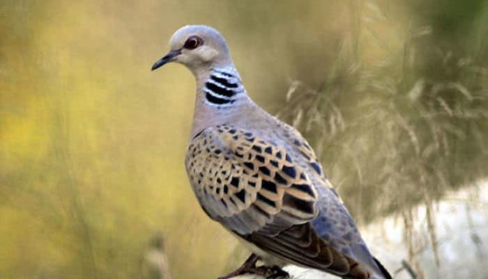 ave en peligro de extinción