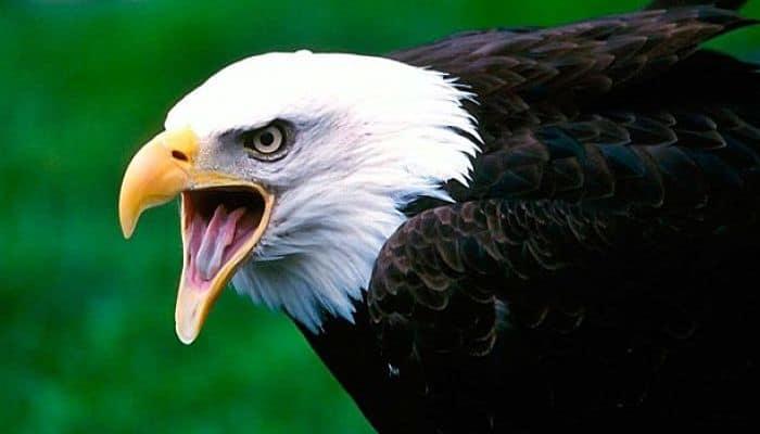 Aves carnívoras